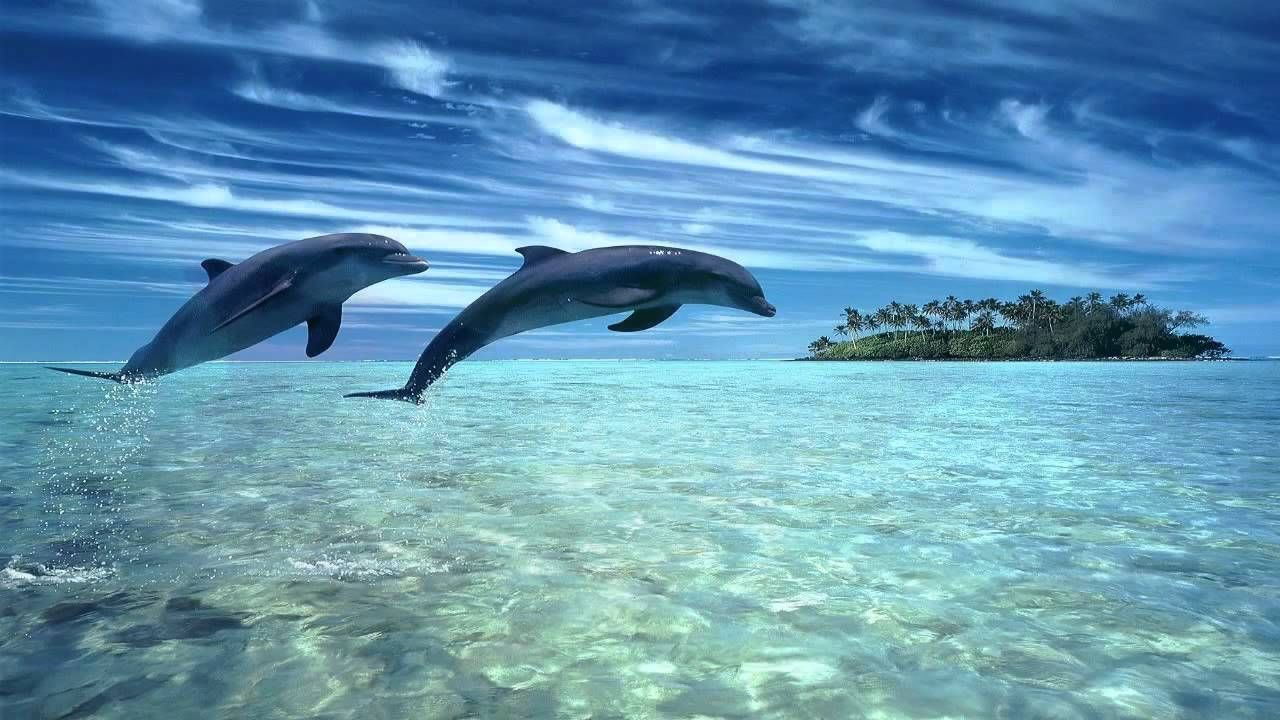 ♫ Dolphin dreams ♫ Melody oceans ♫ Zen and Relaxation ♫ - Very beautiful