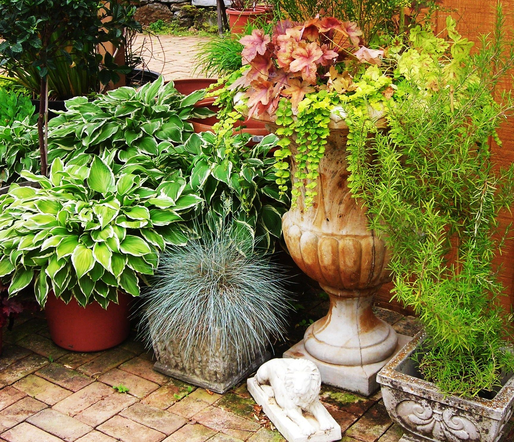 Container Gardening, Plants, Plant