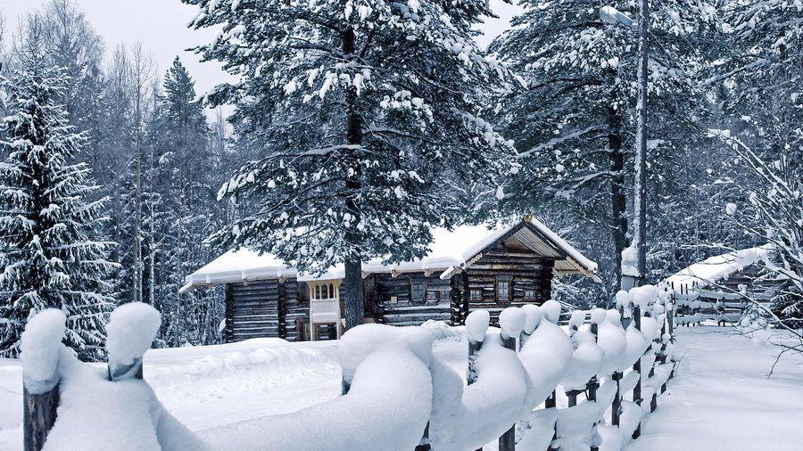 снег, погода, сосны, дом, зима, забор, сугробы