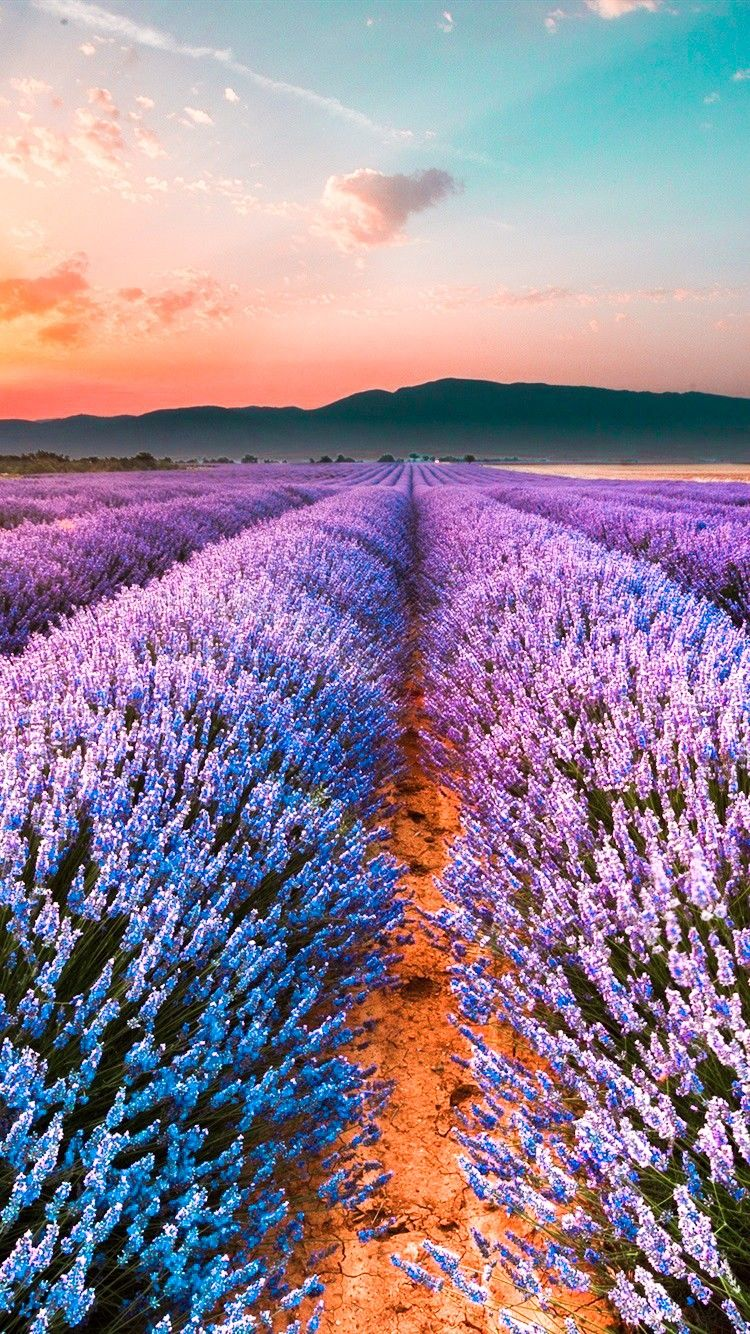 Wonderful Place Purple Flowers Wallpaper Nature Photography Beautiful Places