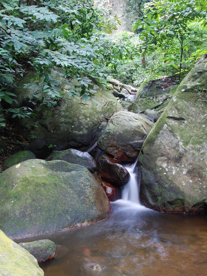 Riachuelo en el Parque Henry Pittier,Edo Aragua,Venezuela.