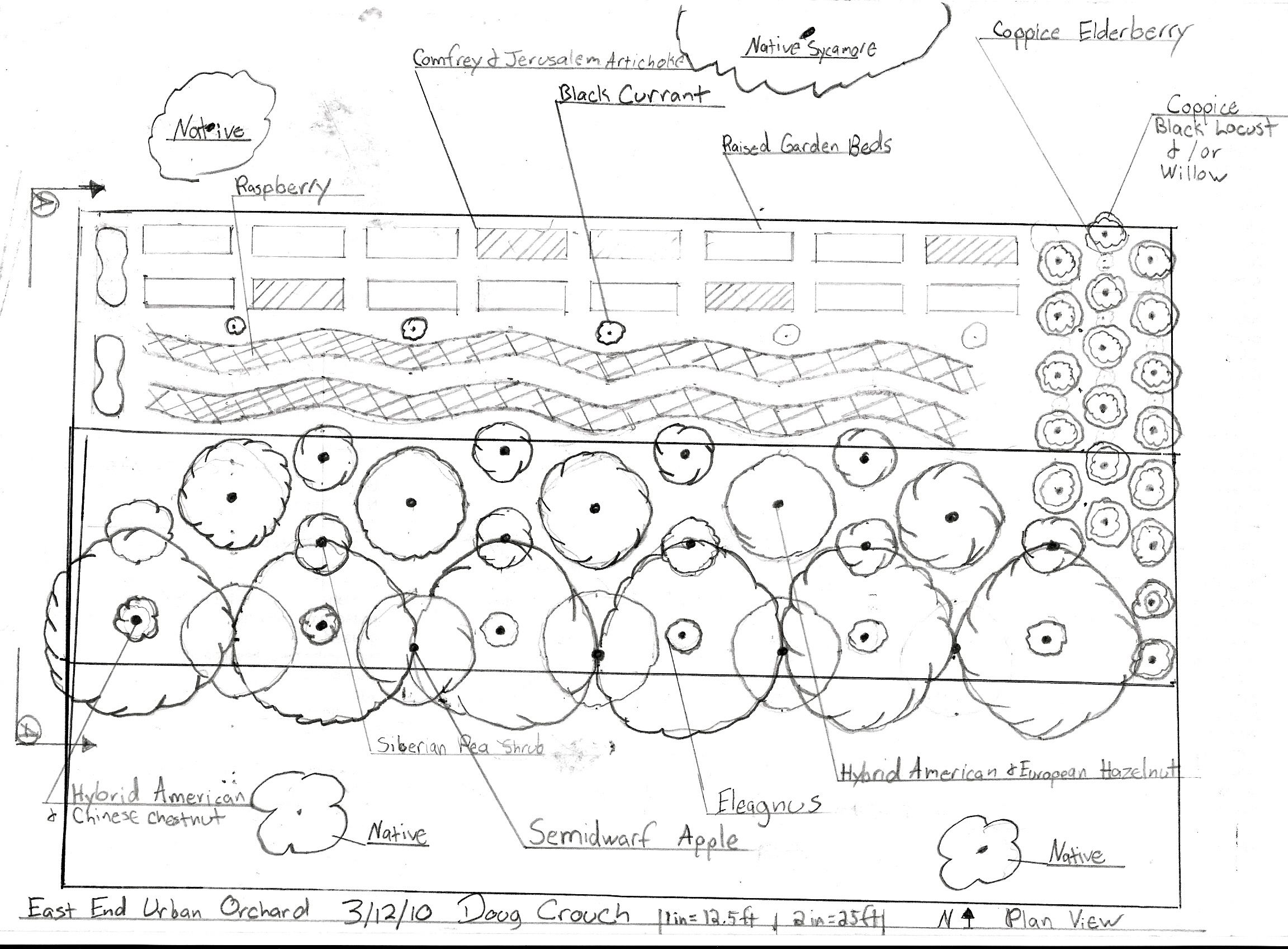 Orchard layout / plan /design. Permaculture garden ...