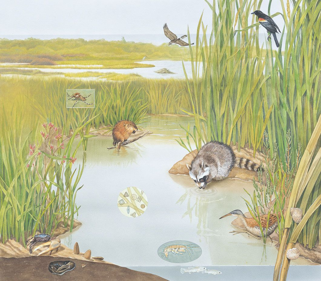 Teach Kids Ecology And Ecosystems With This Interactive
