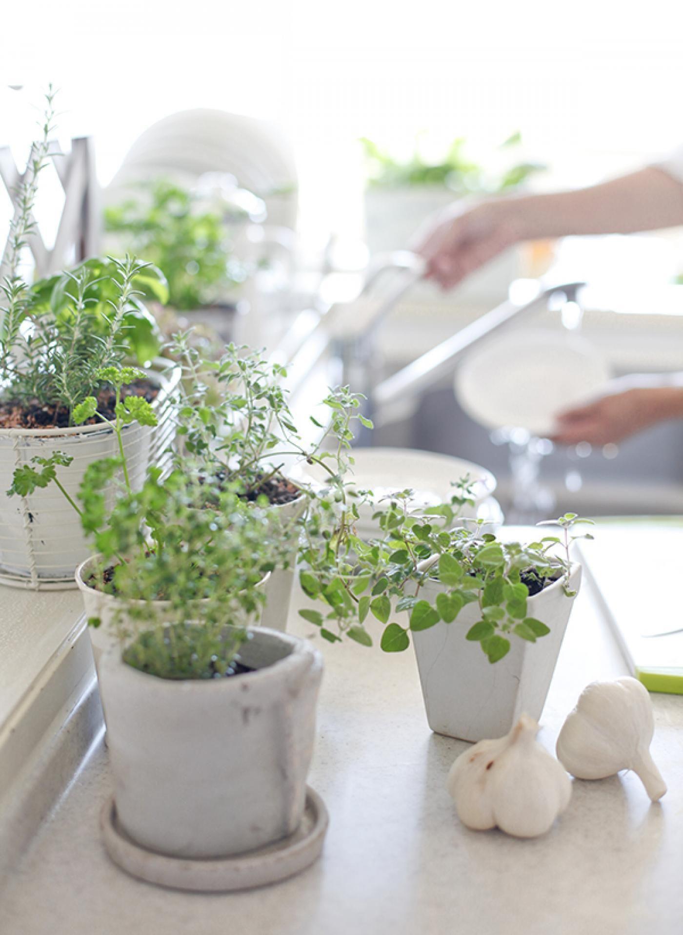 Így öntözzük a szobanövényeket! Lakáskultúra magazin