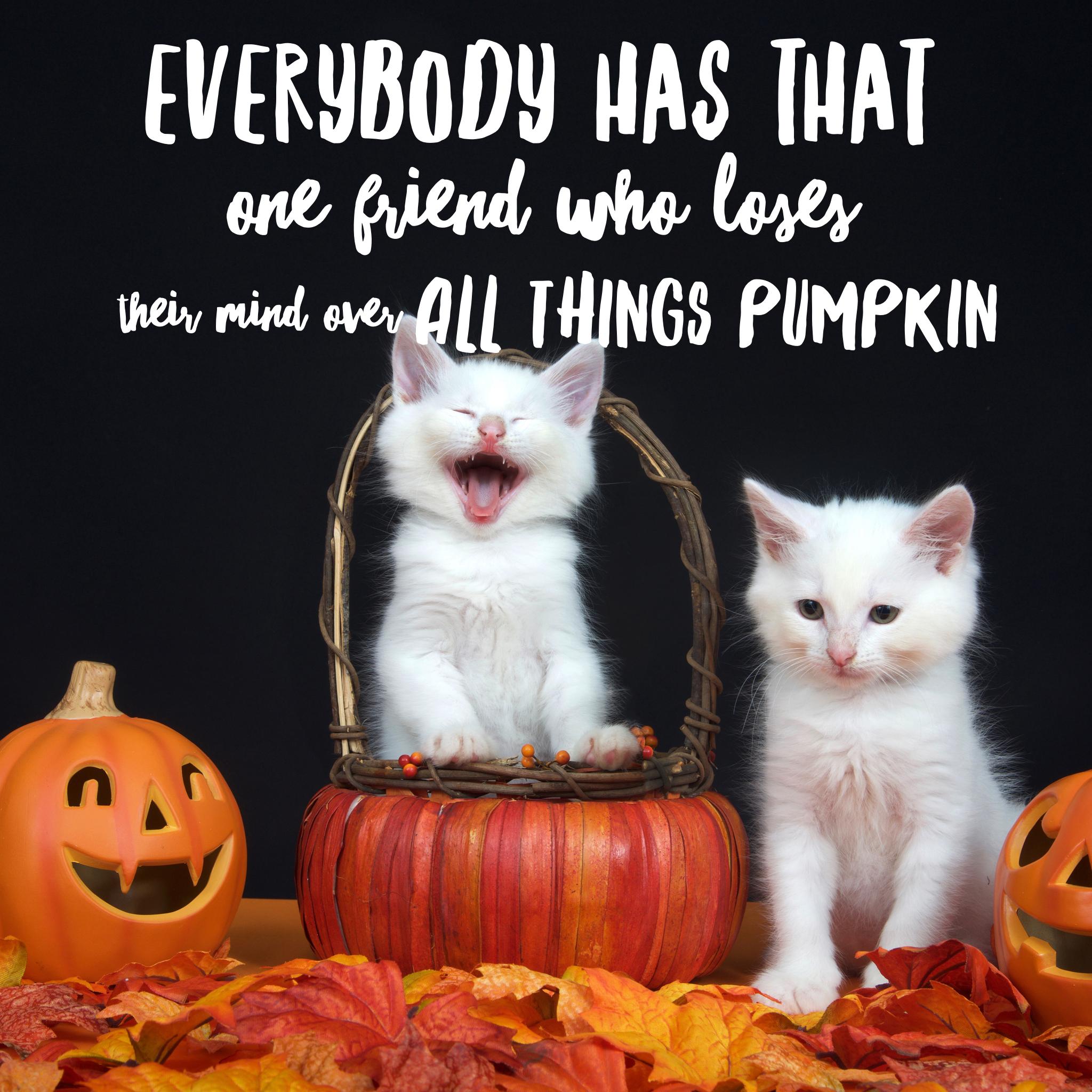 Halloween Memes Halloween Memes Funny Halloween Jokes