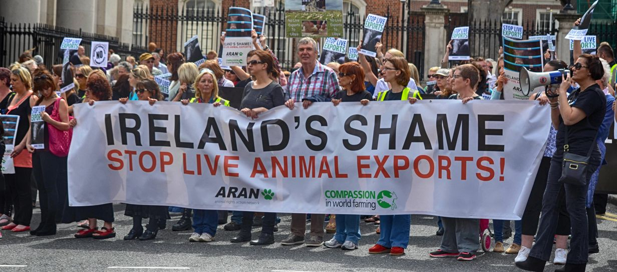 Protest Against Live Exports From Ireland To Countries Outside Of The Eu The Protest Was Held At Dublin Castle On May 16th 201 Live Animals Dublin Castle Live