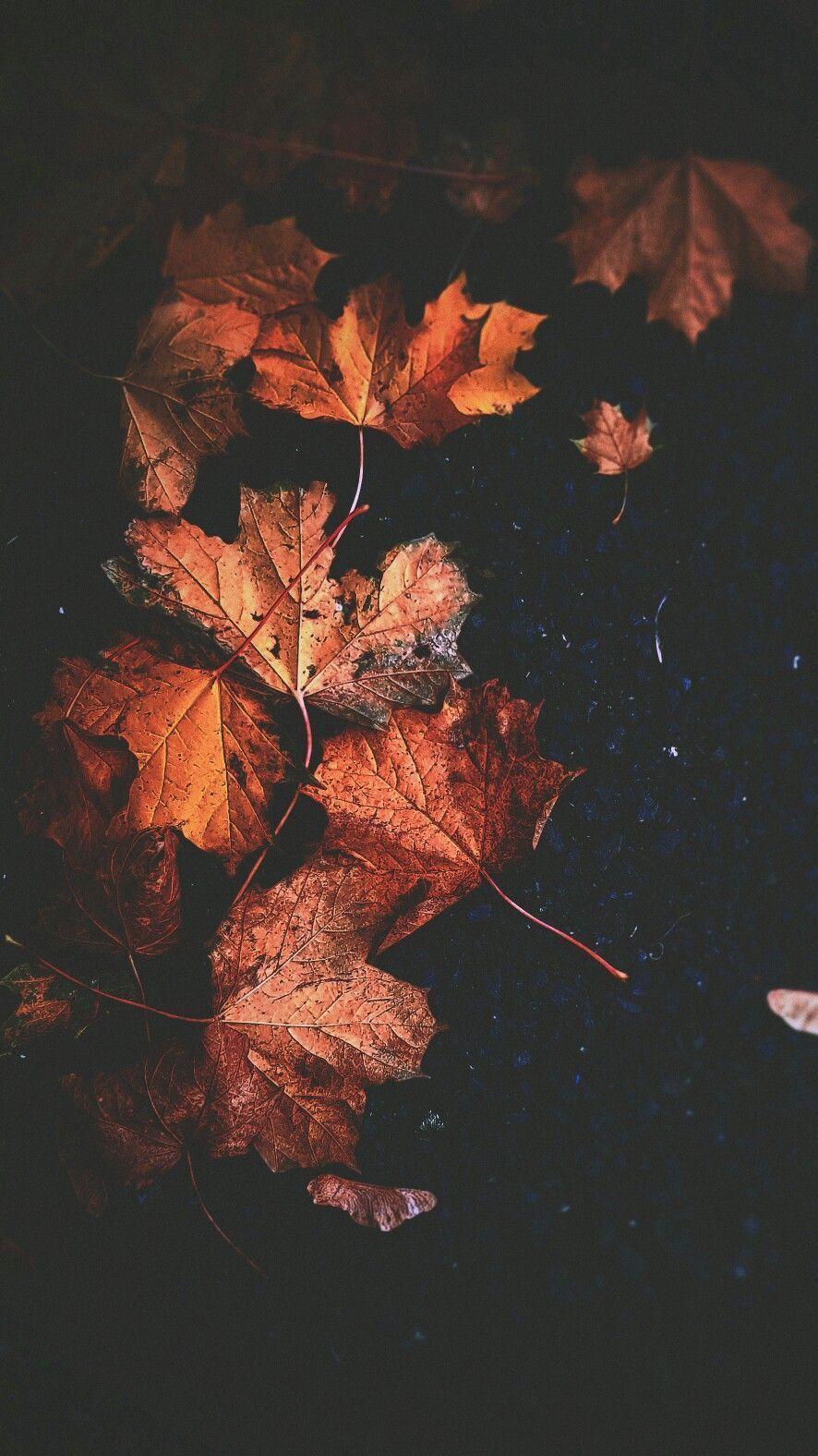 Fallwallpaperiphone Fallwallpaperiphone Fallwallpaperiphone Autumn Wallpaper Hd Cute Fall Wallpaper Iphone Wallpaper Fall