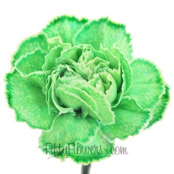FiftyFlowers.com - Green Carnation Flower Tinted