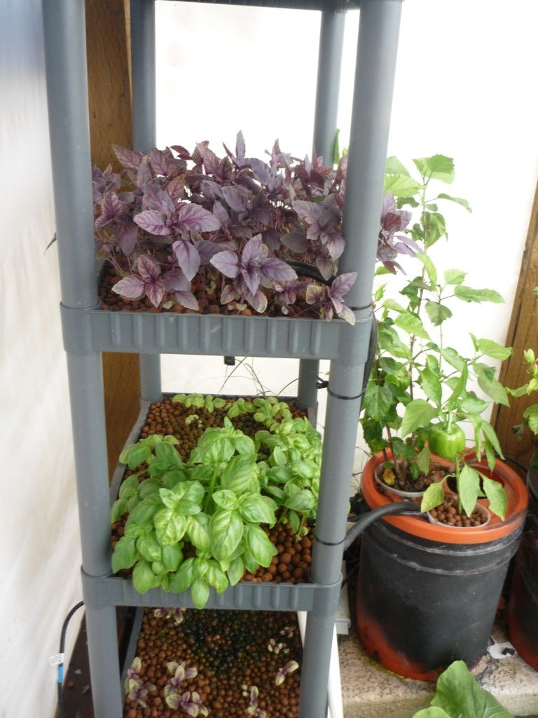 Aquaponics shelf set up aquaponics pinterest for Garden pool aquaponics