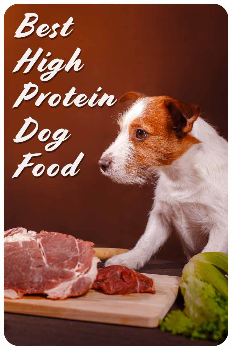 Best High Protein Dog Food To Enrich Your Pet S Diet High