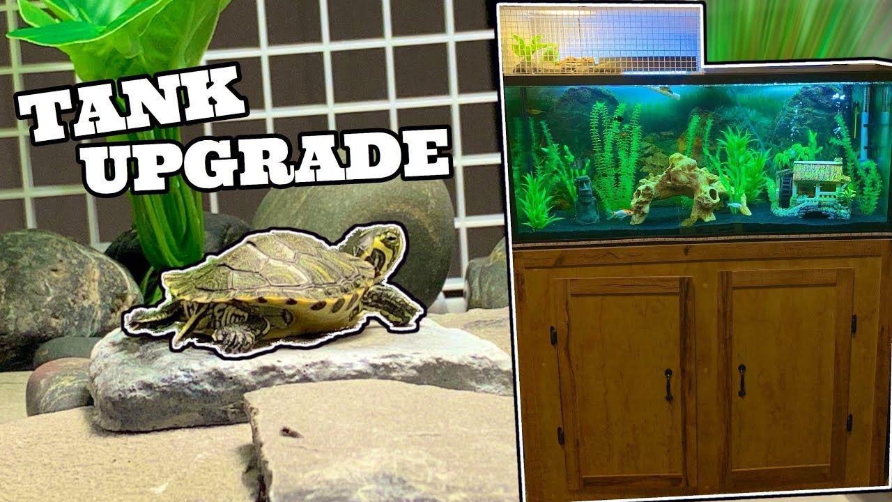 Pet Turtle Gets A New Home Youtube Pet Turtle Turtle Pets