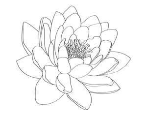 Water Lily Tattoo Design By Selective Universe On Deviantart With Images Water Lily Tattoos Lily Tattoo Design Lily Tattoo