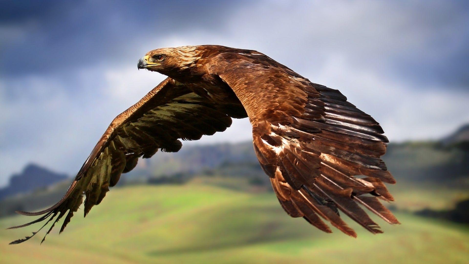 Bald Eagle 8k Close Up Bird Of Prey 8k Uhd Bird Eagle Wildlife Beak Photography 8k Wallpaper Hdwallpaper Eagle Wallpaper Bald Eagle Animal Wallpaper