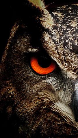 Get Iphone Backgrounds Cute Owls Wallpaper Owl Wallpaper Owl Background