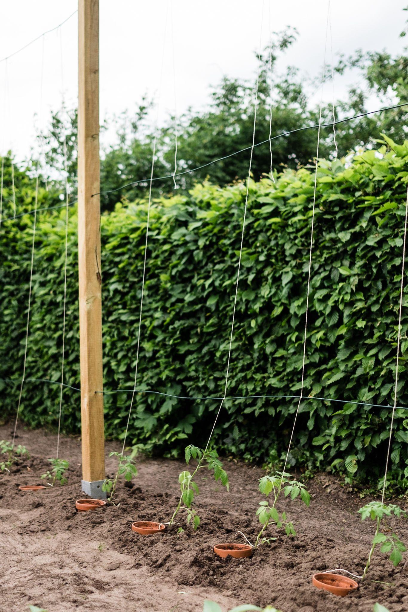 Tomaten Vermehren Pflegen Ernten Teil 5 Auspflanzen Und Rankhilfe Diy Tomatenpflanzen Plants Diy Garden Outdoor Structures