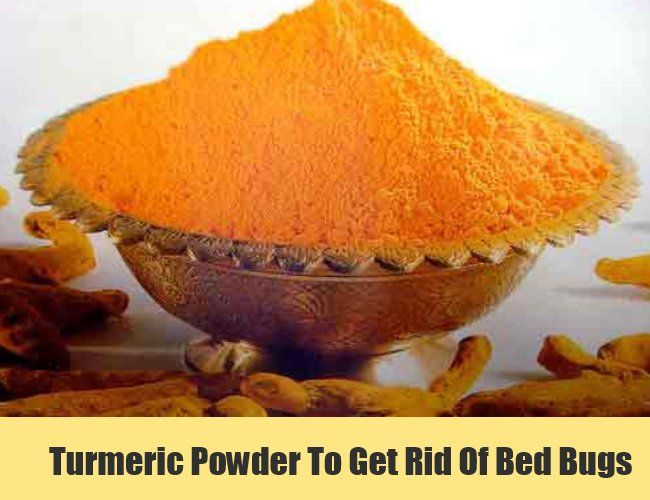 Turmeric powder to get rid of bed bugs clean clean clean turmeric powder to get rid of bed bugs ccuart Choice Image
