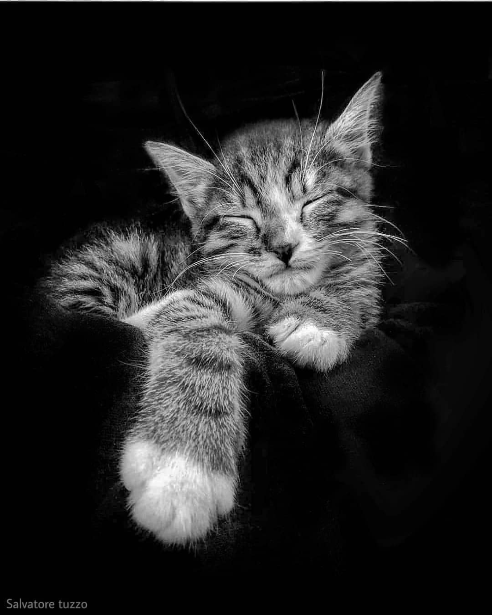 Chat En Noir Et Blanc Chat Noiretblanc Blackandwhite Photo Salvatore Tuzzo Instagram Animals Black And White Gorgeous Cats Cat Photography