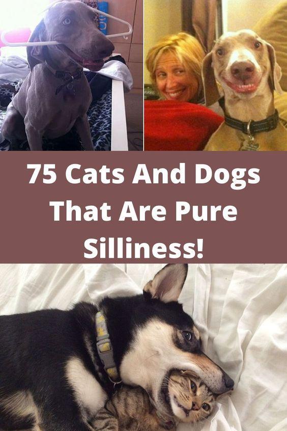 Pin On Beautiful Pets