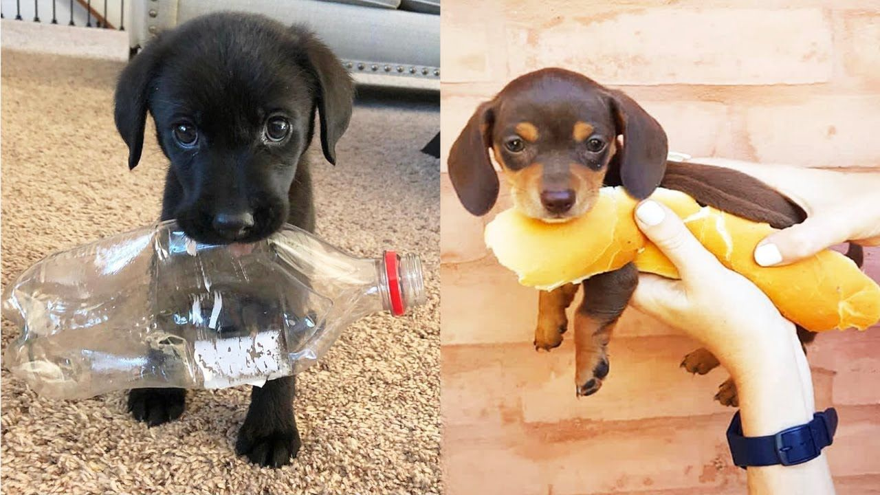 Cute Puppies Doing Funny Things 2019 12 Cutest Dogs Cute