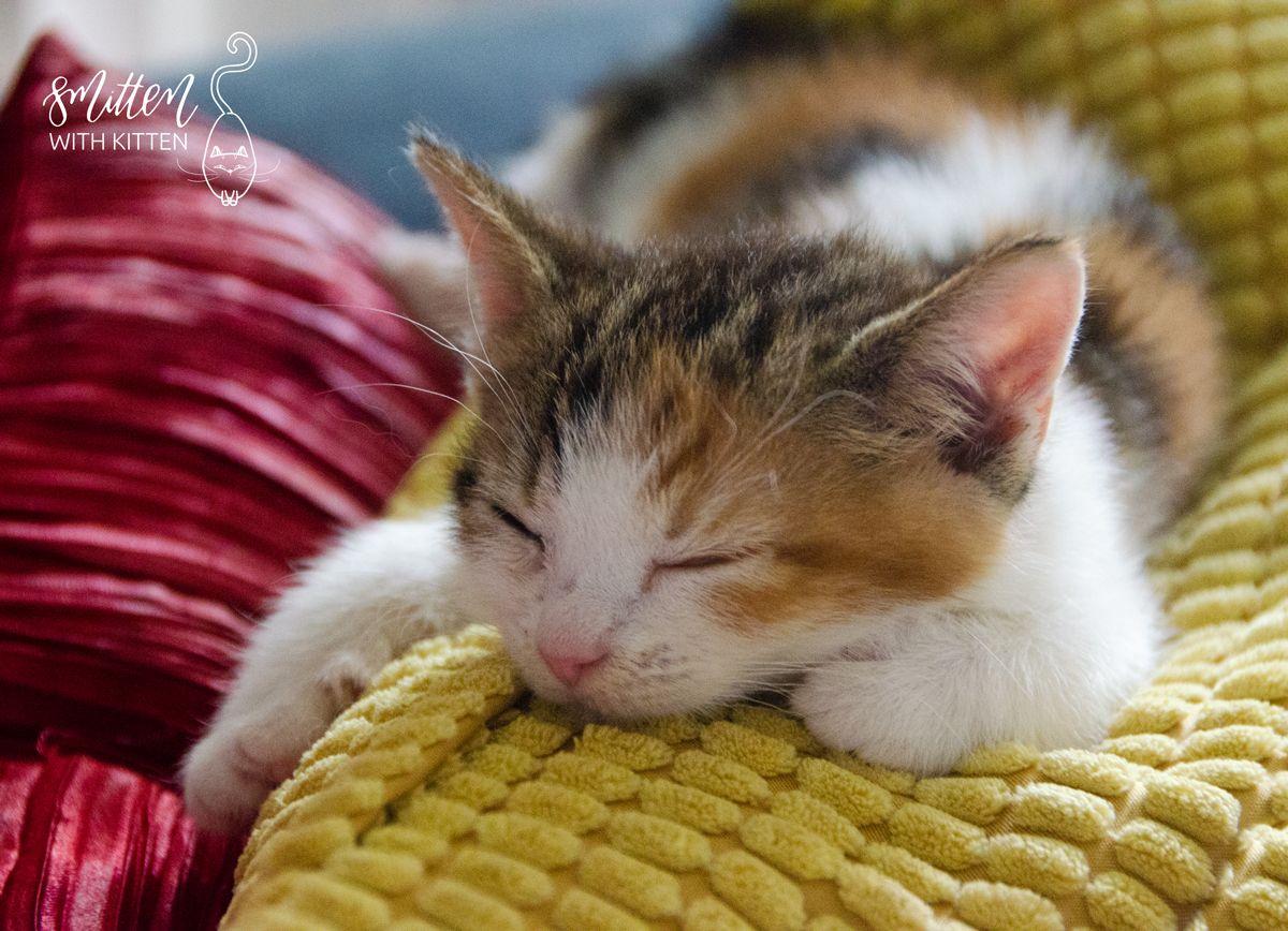 This Little Girl Was One Of My First Foster Kitten She Stole A Piece Of My Heart Dawn Foster Kittens Kitten Kittens
