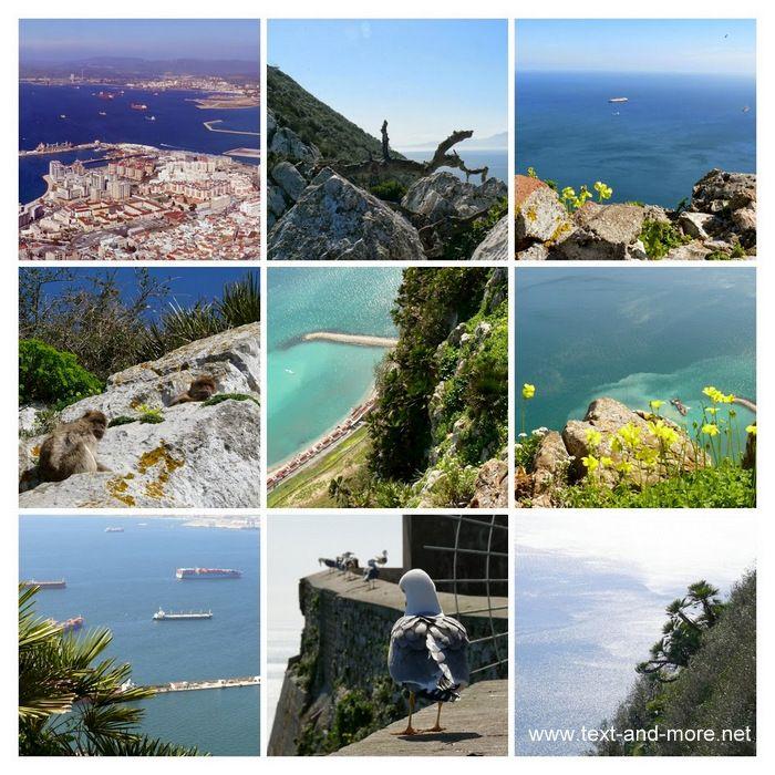 Spontaner Besuch bei den Affen von Gibraltar Online