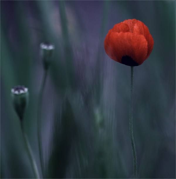 Beautiful Flowers By Natalia Ova With Macro Photography Is Close Up Of Usually Very Small Objects