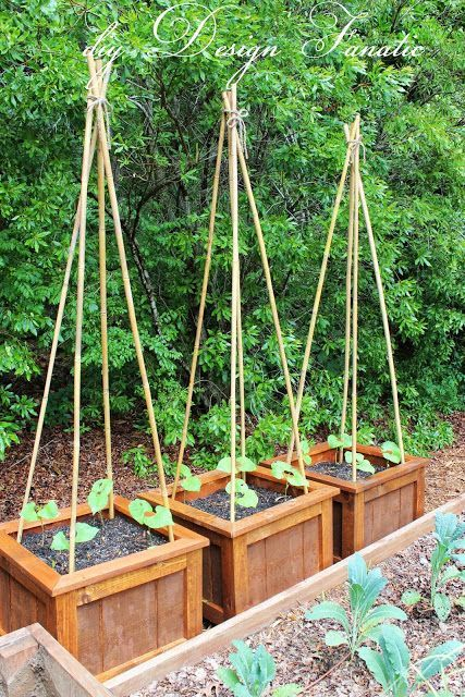 How To Grow Beans I Planted 4 Pole Beans In Each Planter Box Vertical Vegetable Gardens Growing Green Beans Diy Planters