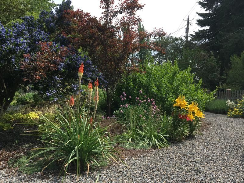 Cascadecopia Gallery Olympia Wa Landscape Design And Install Landscape Design Landscape Edible Garden