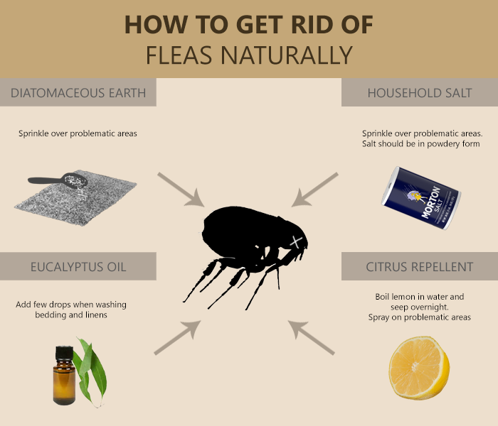 23a60a95ed106594789517ace8c56d93 - How To Get Rid Of Fleas Organically In Your House