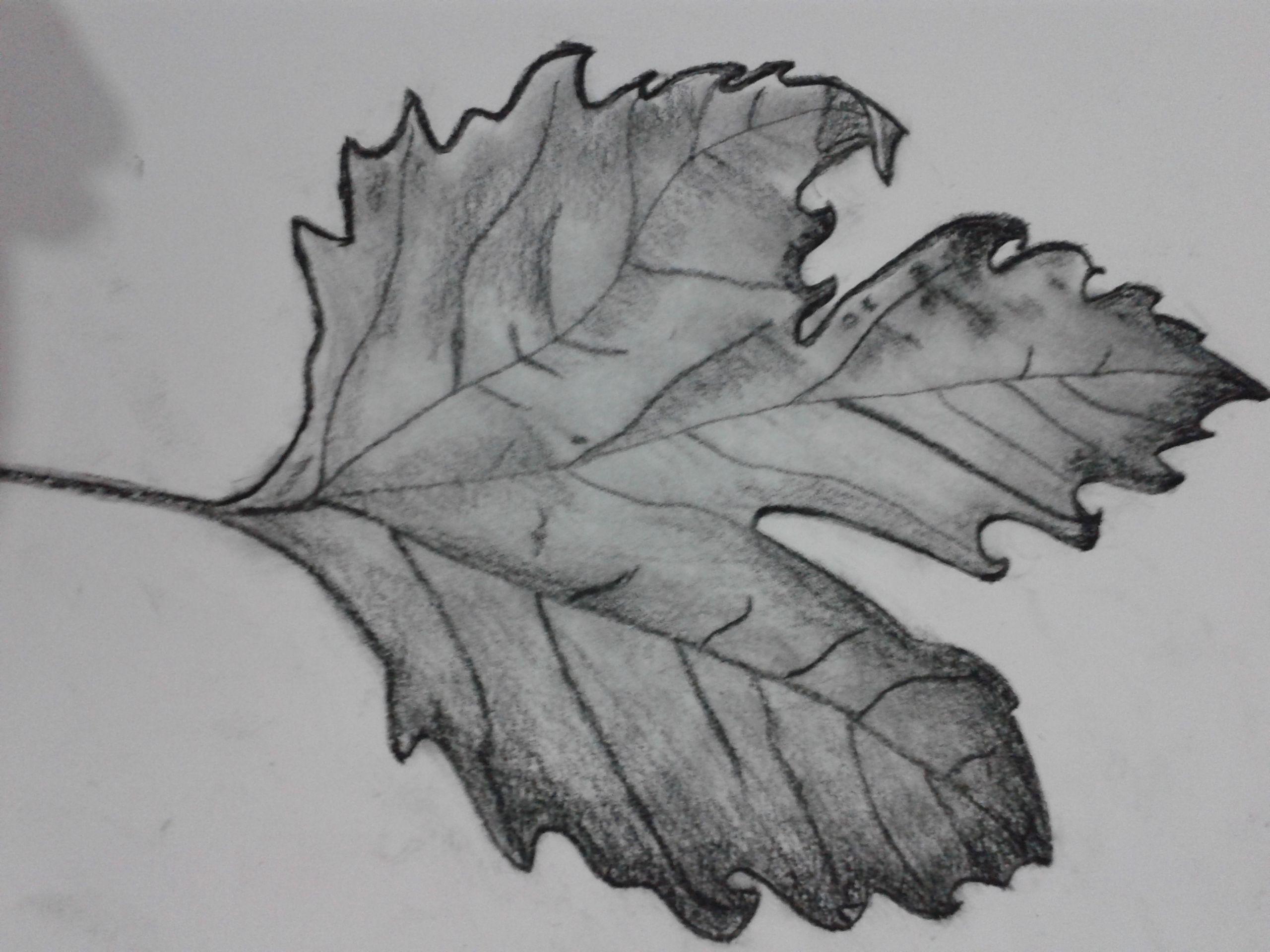 Yaprak çalışması 2 Benim çizimlerim Sketches Ve Art