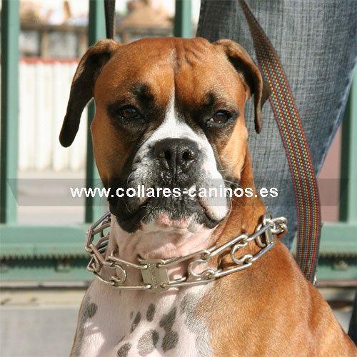 Tipos De Collares De Castigo Para Perros Collar De Castigo Perro Adiestrador Profesional Adiestramiento
