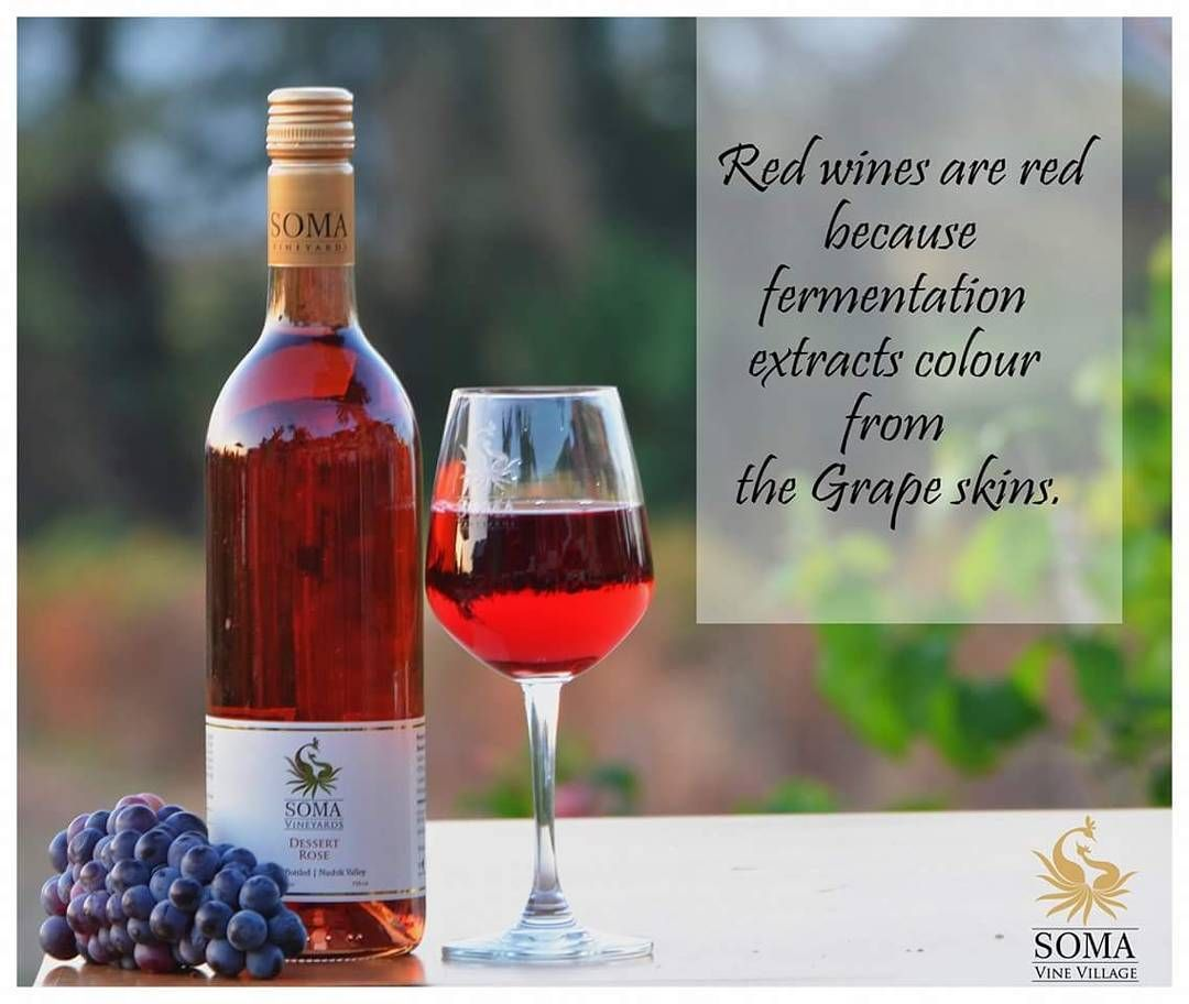 Wine Fact Knowmoreaboutwine Somavinevillage Wine Winerylovers Winery Winelovers Winetasting Grape Skin Wine Facts Wine Lovers