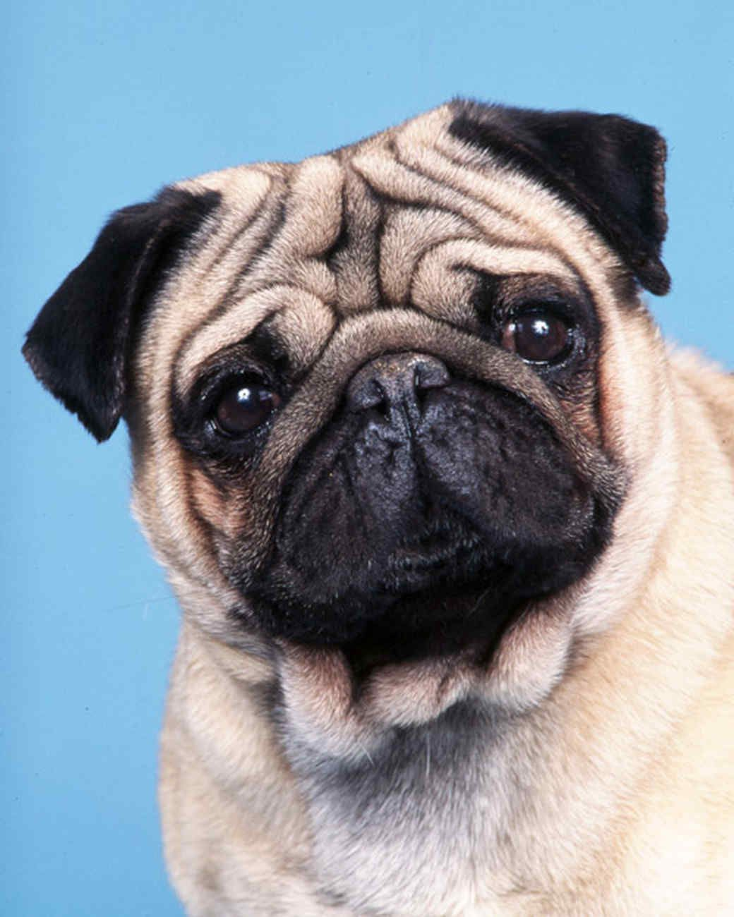 Senior Dog 5 Solutions To Common Issues Dogs Dog Behavior Dog