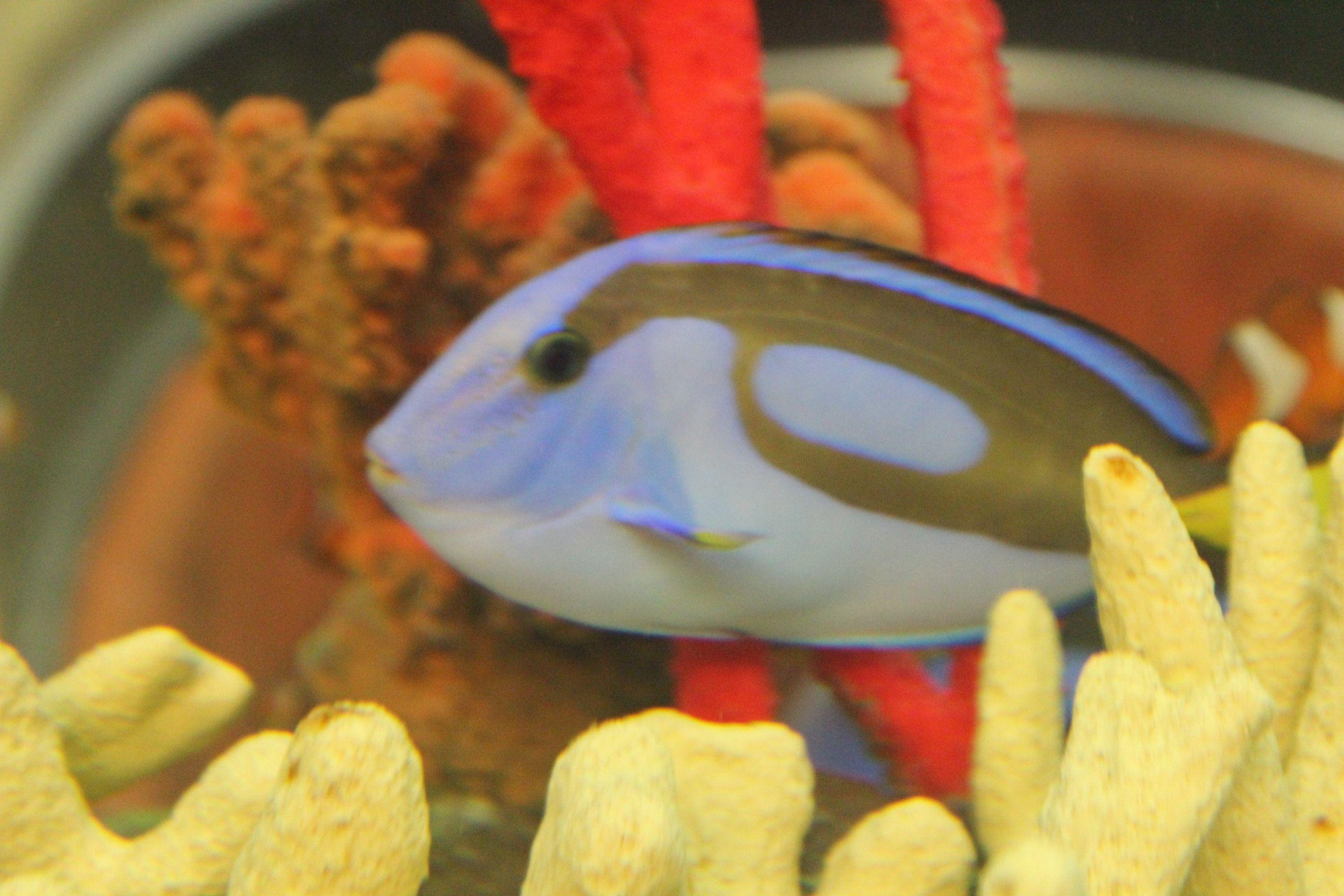 23a8988dcdad77921f648db35ff7e6c6 Frais De Aquarium Osaka Concept
