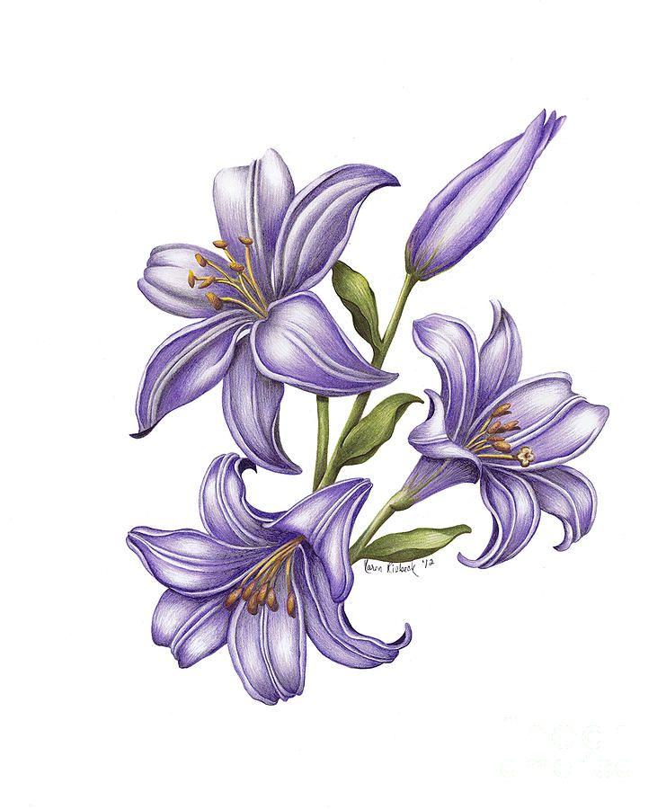 Iris Painting - Mia Bella by Karen Risbeck