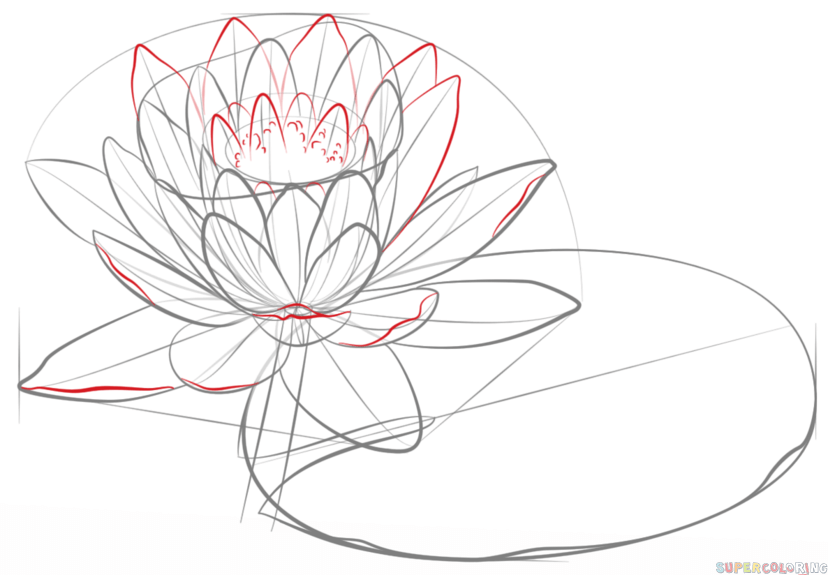 how to draw a water lily and pad
