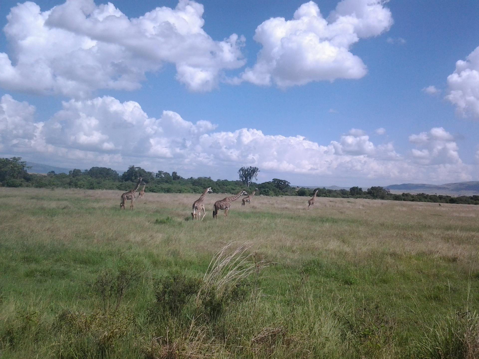 Who We Are/ Kenya Adventure Safaris/ Budget Camping