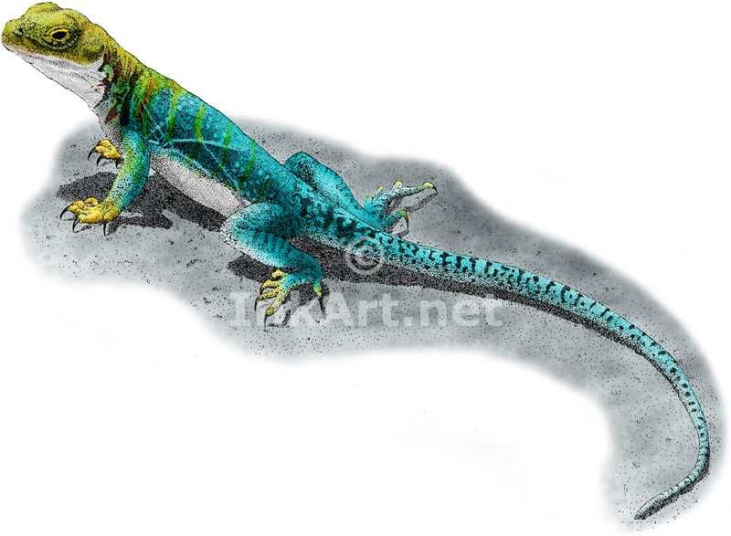 Colorful Lizards Drawings | www.pixshark.com - Images ...