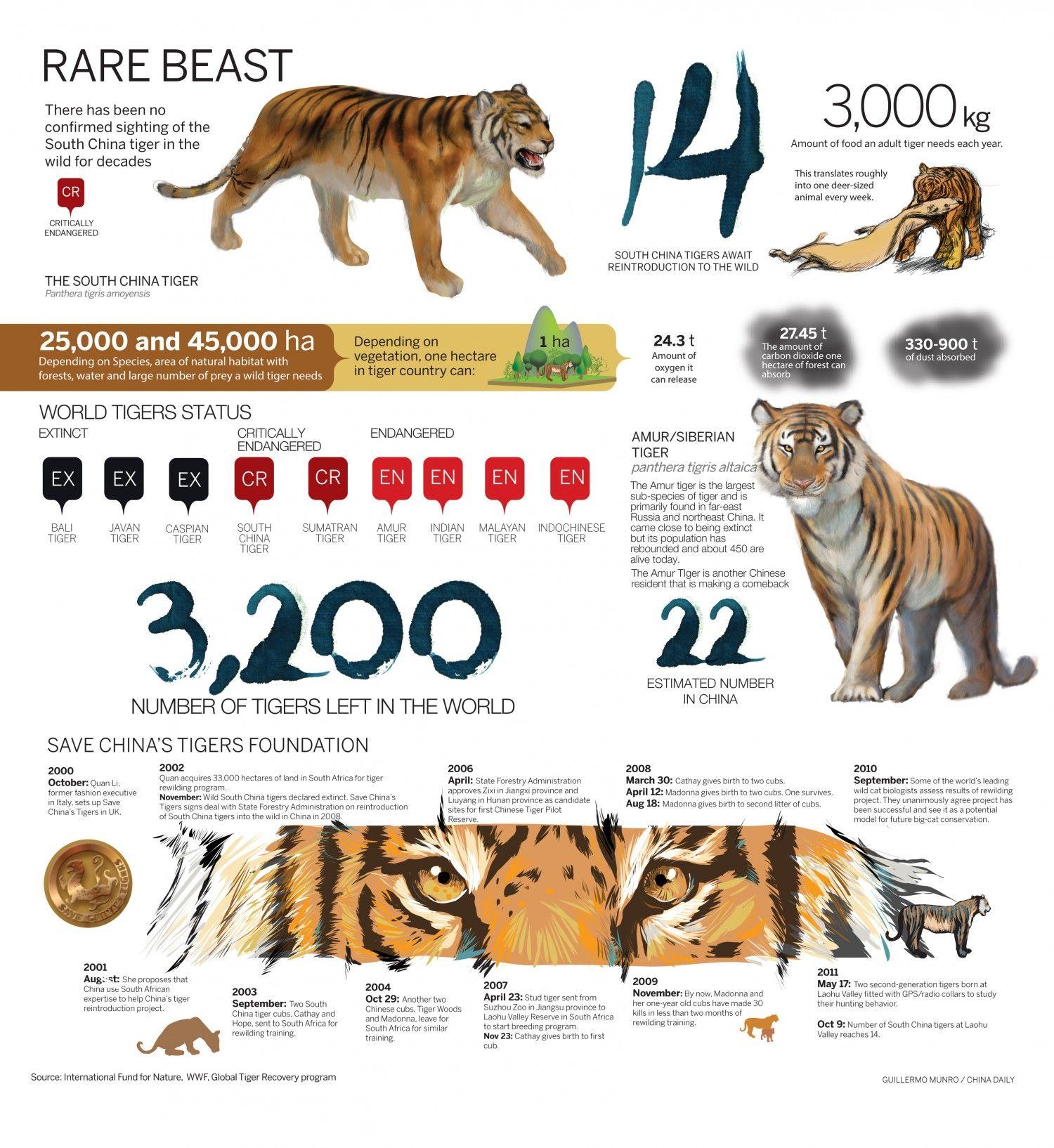 Rare Beast Pet Tiger Endangered Animals Activities Animal Infographic