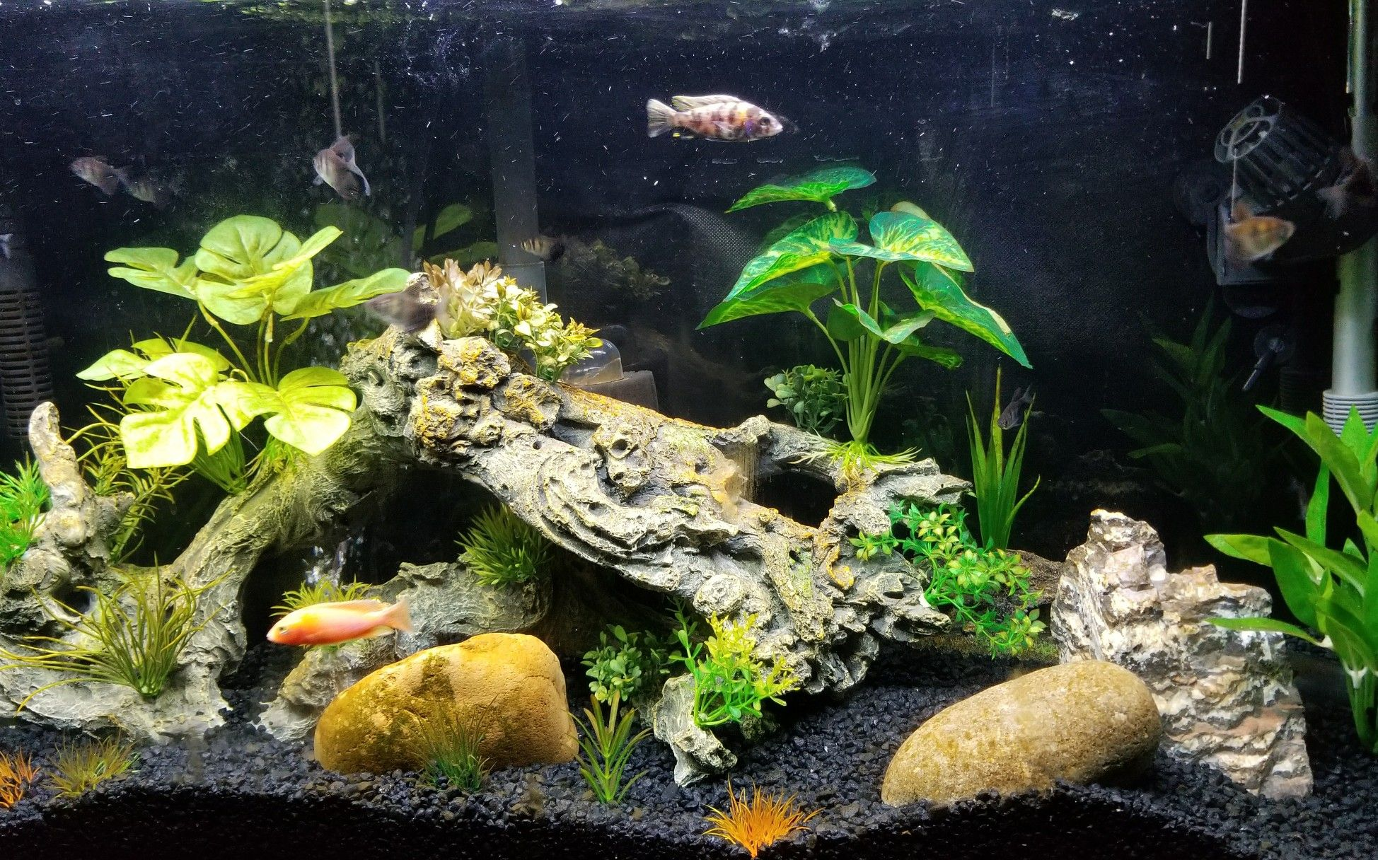 Pin by James Baker on 55 gallons Peacock Cichlid Tank