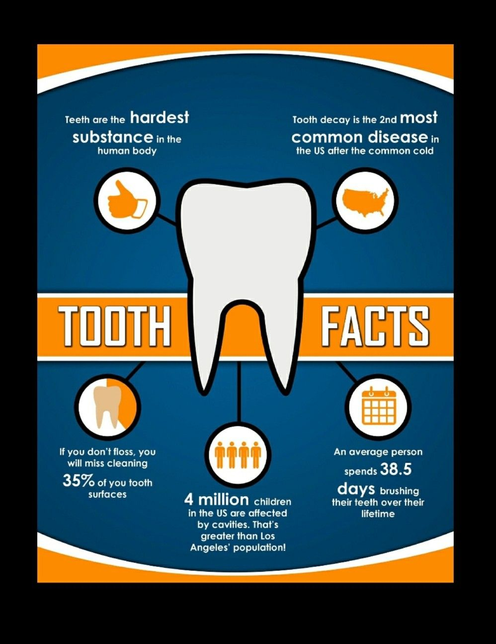Tooth facts  #dentalfacts