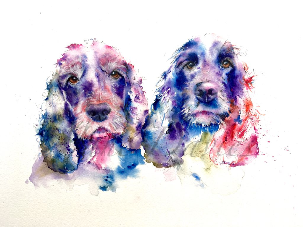 Two Cocker Spaniels Painted In Watercolour By Artist Jane Davies