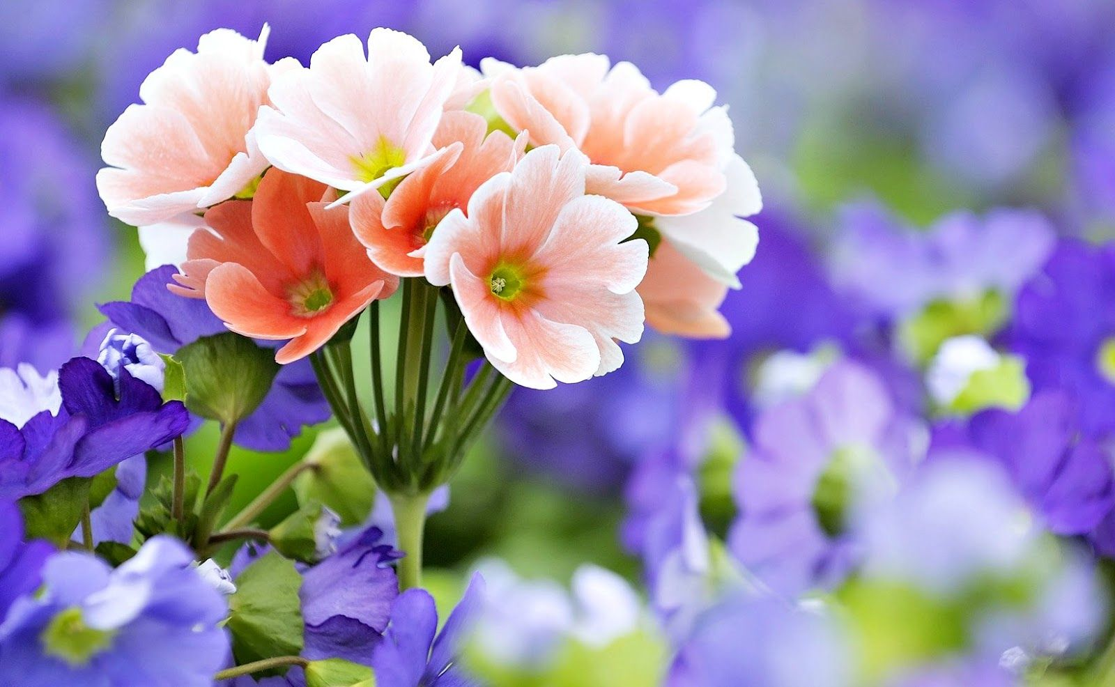 Gambar Wallpaper Bunga Cantik Indah  Caption IG Keren