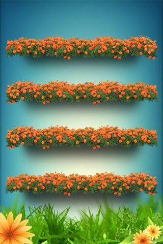 Orange Iphone Wallpaper Bing Images Shelf Wallpaper Iphone