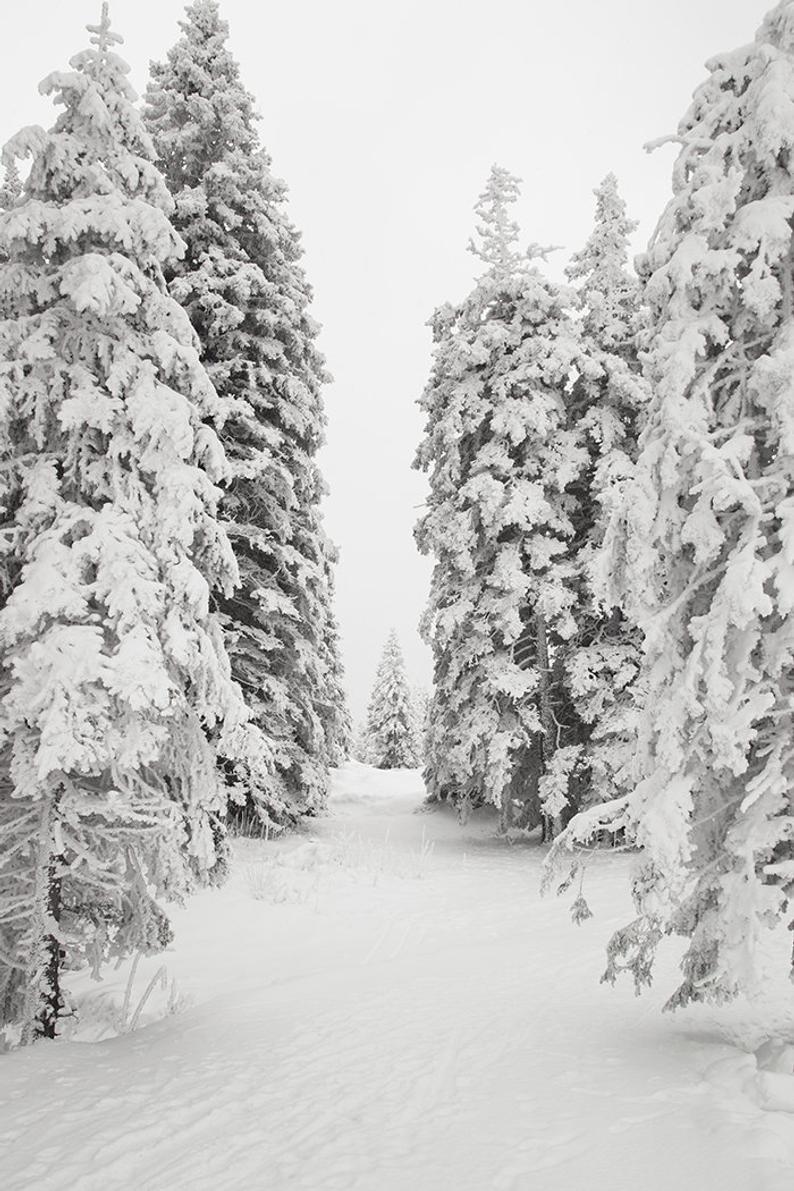 Winter Forest Art Snow Photography Pine Tree Print Winter Wall Decor Christmas Print Winter Landscape Forest Photograph Printable Wall Art