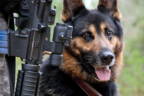 Rexo The Brave Defender Military Working Dog Military Dogs War