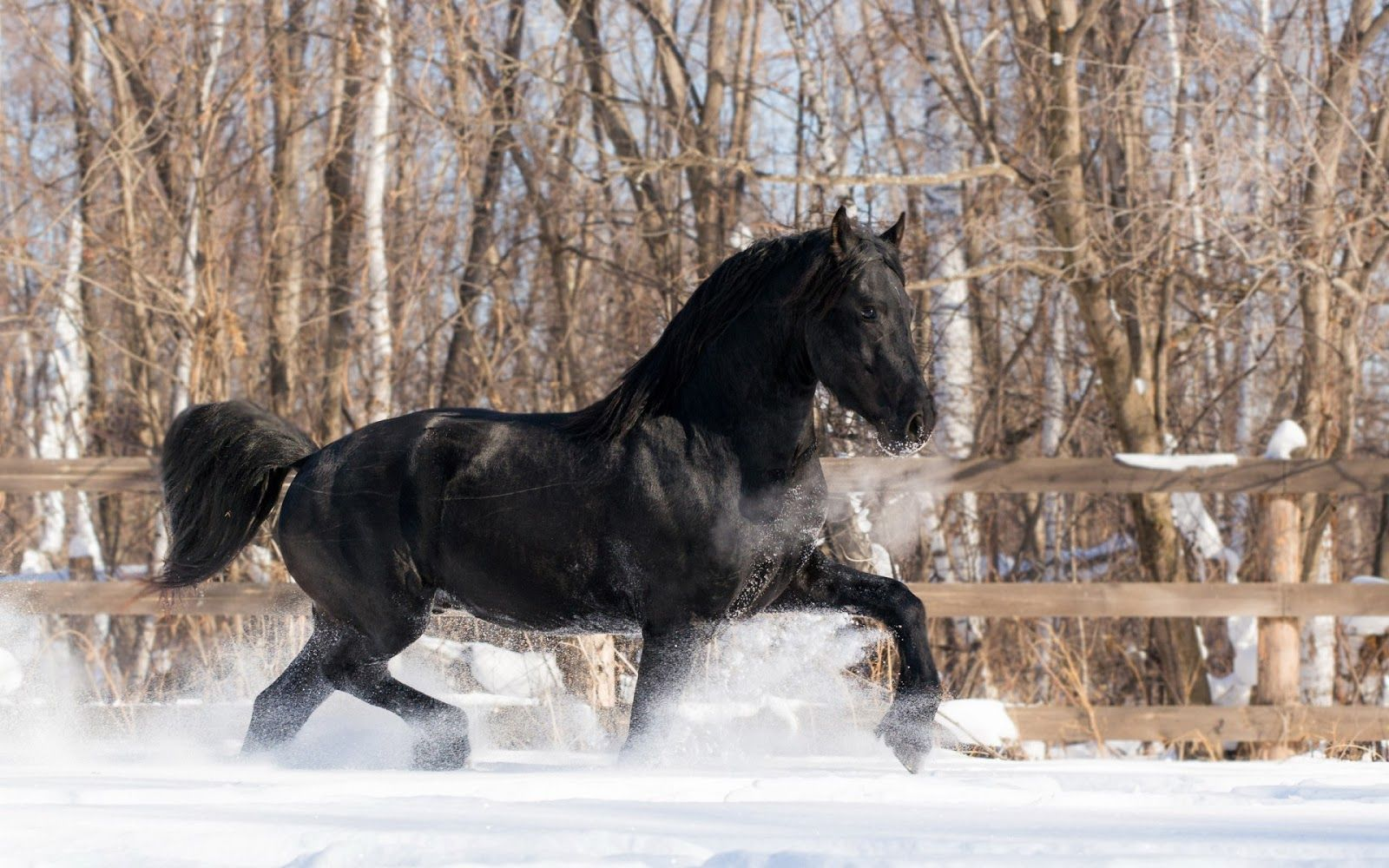 Simple Wallpaper Horse Winter - 23abf91f4ee1c00ded0397897c5fb955  Pictures_93628.jpg