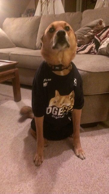 Dog in Dogecoin outfit :)