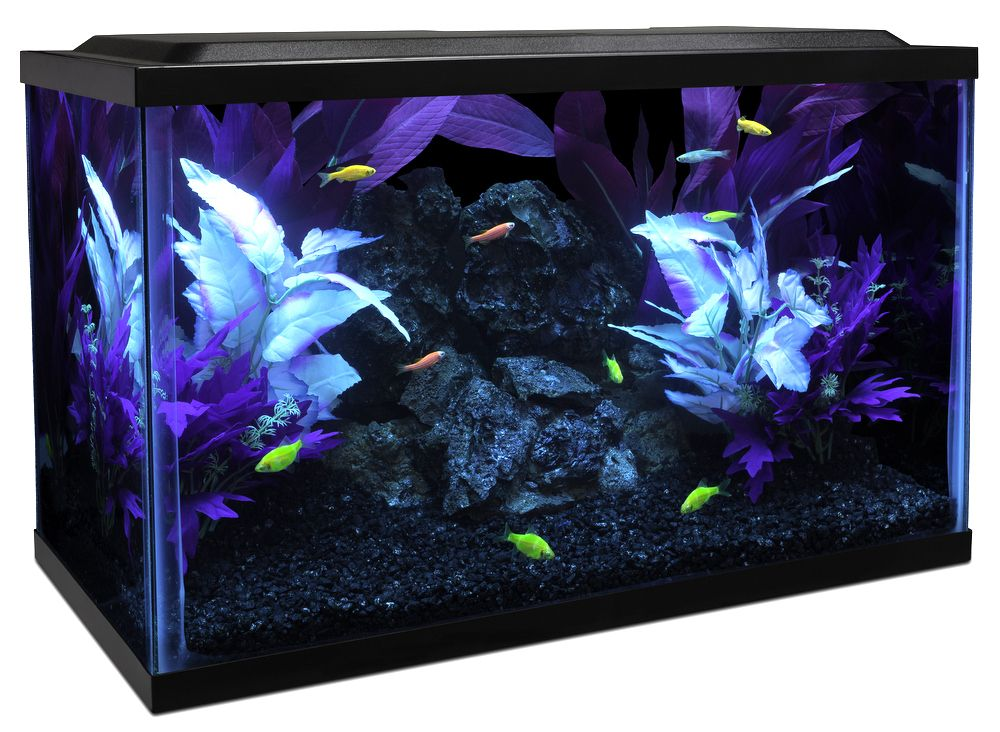 I 39 m going to do up a tank like this with all glow tetra for Tetra fish tank