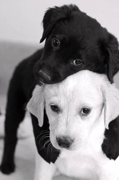 кошки love Black and white cute   Puppy   Dog   animal   pets #cutepuppies